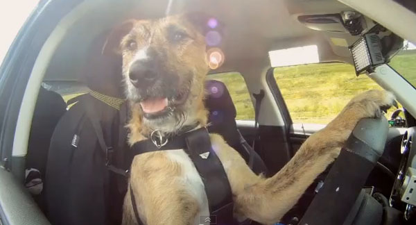 Motorista bom pra cachorro