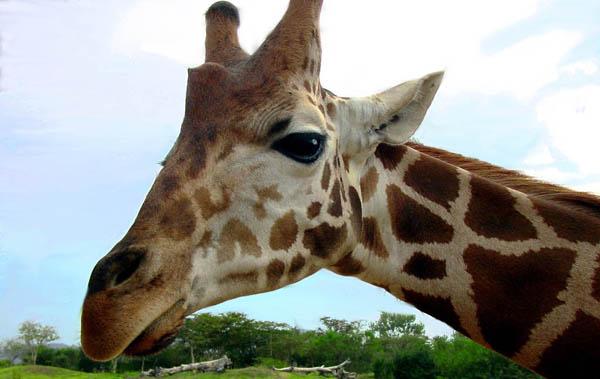 Insights de Marketing com o jogo da girafa