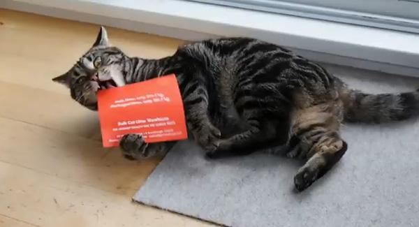 Mala direta para gatos