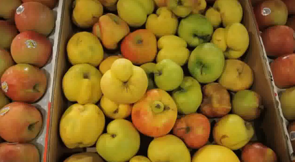 Frutas feias lucrativas