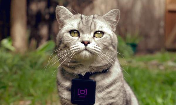 Catstacam, onde gatos viram usuários do Instagram
