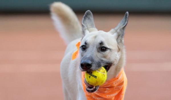 Apoio criativo para estimular adoção canina